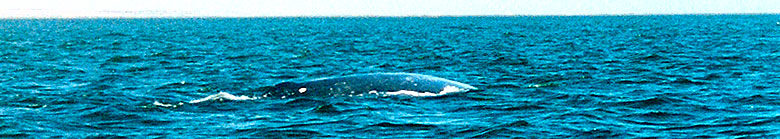 Whale Watching  at Playa del Socorro